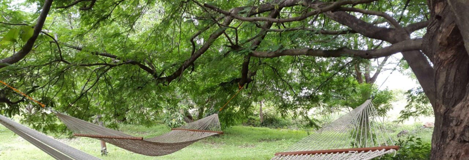 Camp Linger at Nachikuppam, Krishnagiri